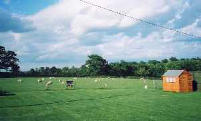 View of main field
