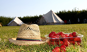 Strawbwerries, hat and tent