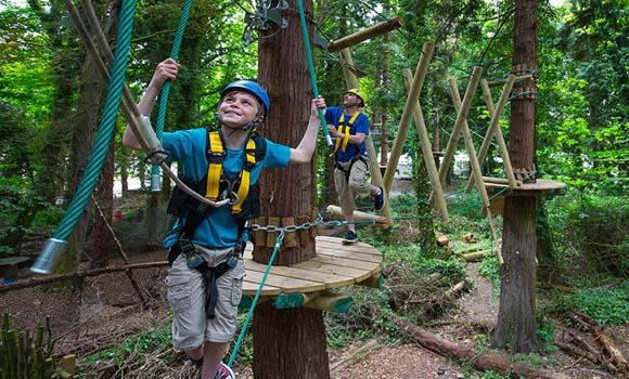 Tree activities
